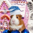 Stock Photo: Guinea pig in winter hat over Christmas background