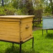 Beehives  in the garden — Stock Photo