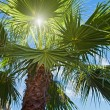 Palm tree and sun rays against blue sky — Stock Photo #30321879