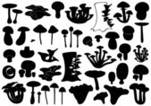 Set Of Different Mushrooms — Stock Vector
