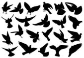 Set of different doves — Stock Vector
