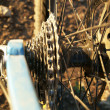 Bicycle Gears — Photo #23294574