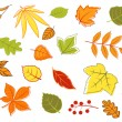 Colorful autumnal leaves and plants - Stock Vector