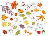 Autumnal leaves and plants — Stock Vector
