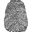 Stock Vector: Fingerprint