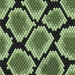 Green seamless snake skin pattern — Stock Vector #28597823