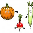 Radish, turnip and pumpkin vegetables — Stock Vector