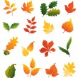 Colourful autumnal leaves set — Stock Vector #35154919