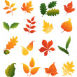 Stock Vector: Colourful autumnal leaves set