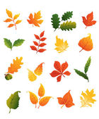 Colourful autumnal leaves set — Stock Vector