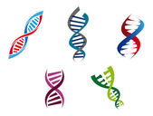Colourful DNA strands — Stock Vector