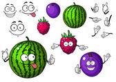 Watermelon, raspberry and plum fruits — Stock Vector