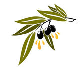 Black olives on a branch dripping olive oil — Stock Vector