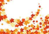 Autumn maples — Stock Vector