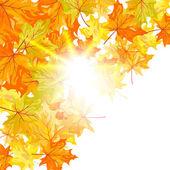 Autumn maple — Stock Vector