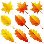 Collection of color autumn leaves — 图库矢量图片