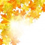 Autumn maple leaves — Stock Vector #28260567