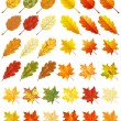 Collection of color autumn leaves — Stock Vector