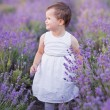 Little girl in a lavender field — Stock Photo