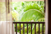 Coffee in a cup on balcony with nature and palm — Stock Photo