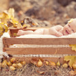 Stock Photo: Autumn newborn baby relaxing in wooden box. Close up portrait.