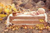 Autumn newborn baby relaxing in wooden box. Close up portrait. — Stock Photo