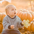 Happy child with pumpkins on sunset — Stock Photo #27751495