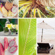 Summer collage with tropical fruit, sunset and palm — Stock Photo