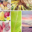 Summer collage with tropical fruit, sunset and palm — Foto de Stock