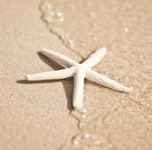 Starfish and wave on the sandy beach with copy-space on the sand — Stock Photo
