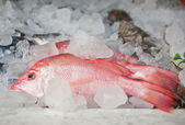 Fresh fish in ice on the market — Stock Photo