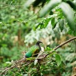 Stock Photo: Green small bird in their nest. Thailand