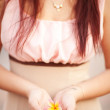 Stock Photo: Woman's hand holds Frangipani (Plumerirubra)