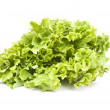 Salad leaves — Stock Photo #19302631