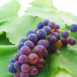 Fresh grape with leaves — Stock Photo #19312761