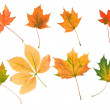 collection beautiful colorful autumn leaves isolated on white background — Stock Photo