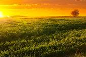Solnedgång barossa valley — Stockfoto