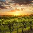 Stock Photo: BarossVineyards at sunset