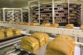 Bread production plant — Stock Photo