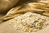 Wheat and oats on the burlap — Stock Photo