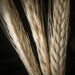 The ears of wheat on black background — Stock Photo #32650283