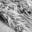 Ears of oat  — Stock Photo