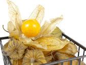 Fruta expuesta de la tierra-cereza — Foto de Stock