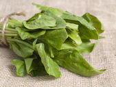 Fresh spinach — 图库照片