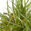 Tuft of grass — Stock Photo #22884082