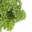 Stock Photo: Parsley tree