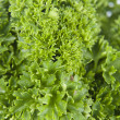 Stock Photo: Parsley in shot