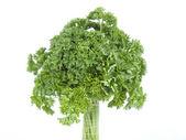 Tree from parsley — Stock Photo