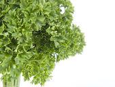 Parsley tree — Stock Photo