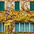 Stock Photo: Old building with yellowed ivy and green windows